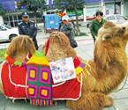 北仑一头骆驼上街当模特