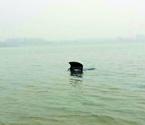 男子爱车在湖中泡澡