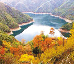 宁波森林彩化工程启动