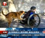 忠犬推殘疾主人擺攤