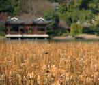 杭州元旦三天遇冷空气