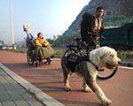广西小伙用狗拉车携患病女友准备环游中国