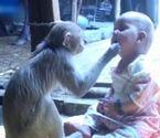 猴子对待小女孩似母亲