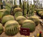 温岭建沙漠植物馆