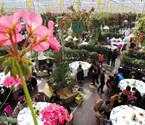 鄞州现省内最大鲜花餐厅