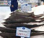 温州一家超市现中华鲟