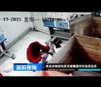 饲养员被曝虐待幼虎
