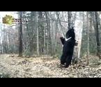 黑熊靠树挠痒性感撩人
