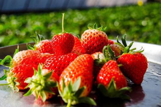 1月科学流言榜:吃草莓等于慢性自杀?