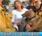 消防员直升机解救小狗