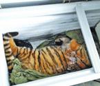 老虎受鞭炮惊吓坠楼摔死