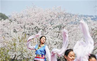 300余名藏族孩子樱园起舞