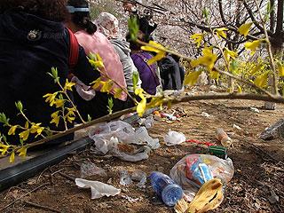 数万游客挤爆樱花山 垃圾遍地