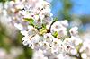 春季绝美赏花胜地