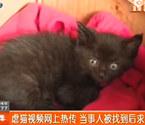 蓉外教虐死小貓被人肉