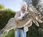 世界最大兔子體長1米3