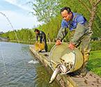 放流万尾鱼苗提升水质
