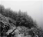奉节、巫溪等地四月飞雪