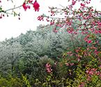 四明山现海棠雾凇