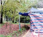 市民为尝鲜挖公园竹笋