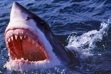 如何避开鲨鱼攻击:不要让自己看上去像条鱼