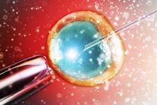 新奇助孕技术:线粒体注入助卵细胞恢复活力
