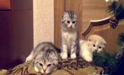 科学实验表明:打哈欠可在人与猫间传染