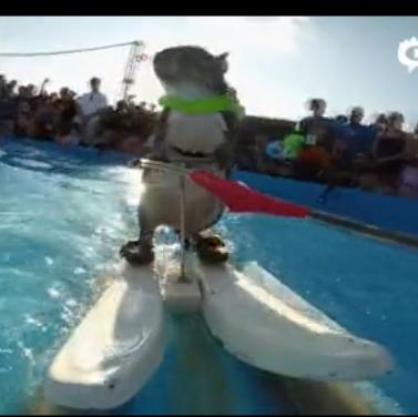 小松鼠现身世界极限运动大赛 滑水神技抢风头