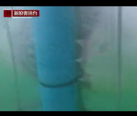 第一视角:女子潜水遇大白鲨惊险逃生