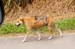 成精了!网友路遇野猴骑狗赶路