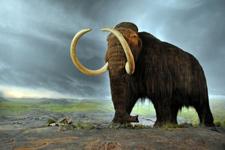 俄建立灭绝动物克隆实验室:望使猛犸象再生