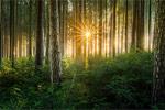 每月新玩法4 小花园拍出大森林的感觉