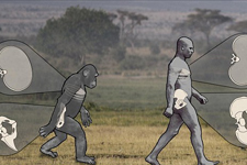 研究显示人类祖先比想象的更擅长直立行走