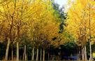 新疆托克逊秋景迷人惹人醉
