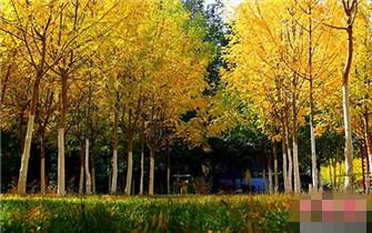 新疆托克逊秋景迷人成摄影爱好者天堂