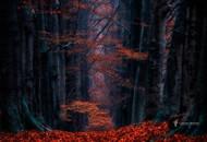 哈苏大师镜头下的森林