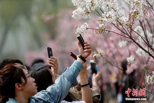 资料图:北京玉渊潭公园早樱绽放吸引游客观赏。中新社记者 杜洋 摄