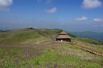 贵州漫山遍野紫色韭菜花竞相开放