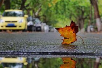 秋风扫落叶 八大关秋景多彩如油画