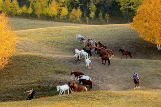 乌兰布统草原初冬景色美如画
