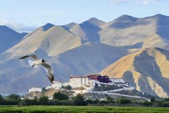 西藏拉鲁湿地风光美