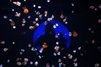 重慶銀河水母館 斑斕水母吸眼球