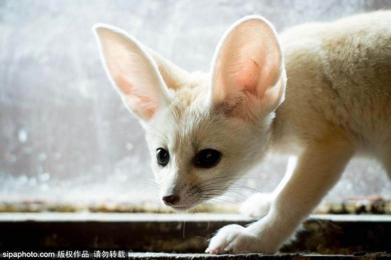 可爱萌的小猫宝宝图片
