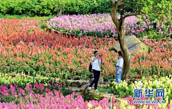 (游客在广西南宁青秀山风景区内赏花拍照。新华社发 许东摄)