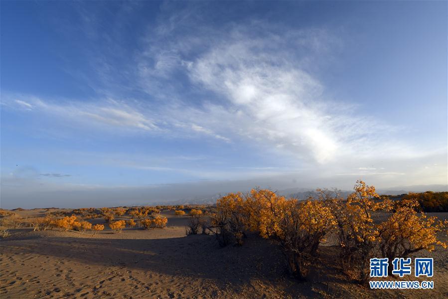 是10月3日在青海省格尔木市拍摄的胡杨林.深秋时节,层林尽染的
