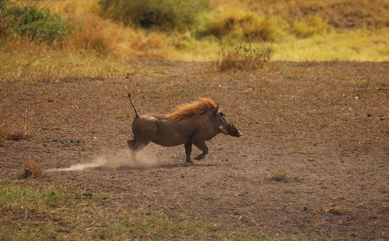 非洲动物野性风采 摄影师走入坦桑尼亚