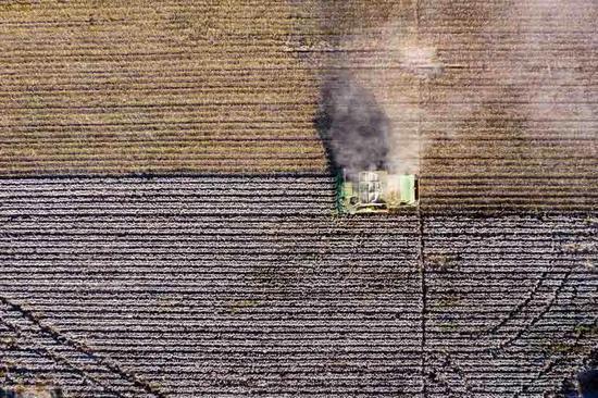 反击对新疆棉花的抹黑 中国八点破解之道!图片