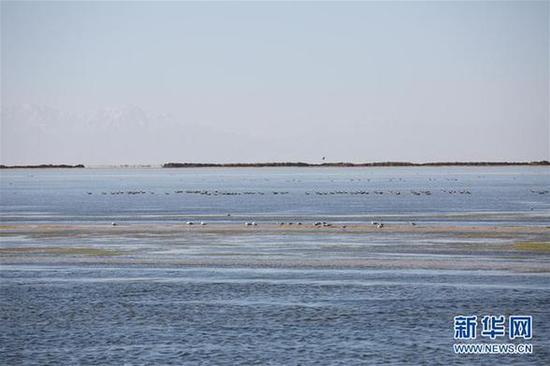 鸟儿在青海察尔汗盐湖边的淡水湖上栖息(9月10日摄)。新华社记者 金立旺 摄