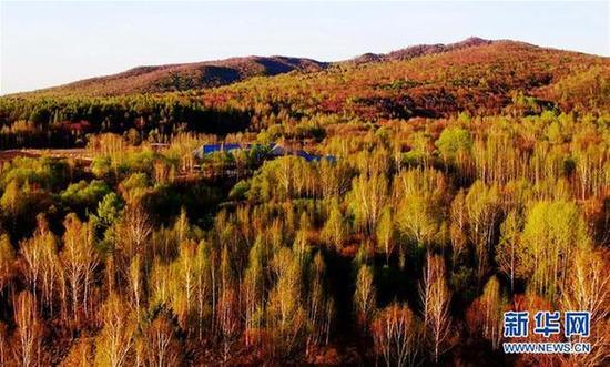 黑龙江省伊春市溪水国家森林公园一角(5月8日摄)。新华社记者 王建威 摄