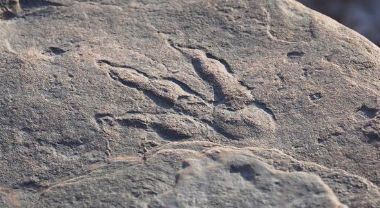 英国4岁女童发现2亿年前恐龙脚印 专家惊叹不已